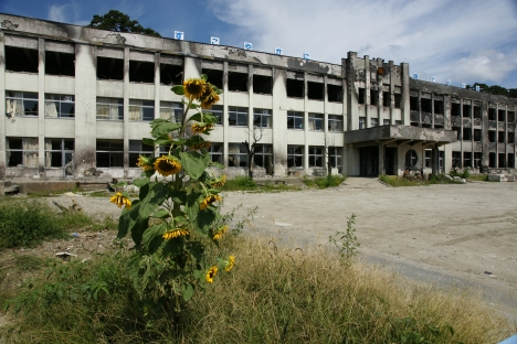 Sunflowers at Kado no Maki Elementary