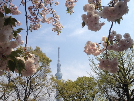Tokyo's Skytree, 634m of steel, concrete and glass – a striking feature of the capital's skyline from many a district. Undoubtedly not the most aesthetically pleasing of architectural creations, a little sakura framing, however, creates an image of harmony in this sea of 33 million people.
