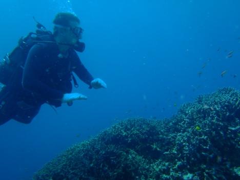 Ishigaki underwater views