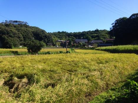Lanes of Nakanoshima