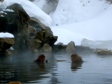 Monkeys in the hot spring at Jigokudani Monkey Park