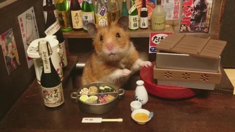 hamster10