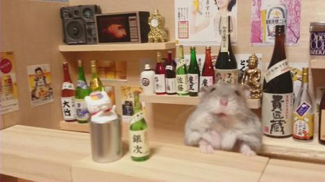 Hamster and sake