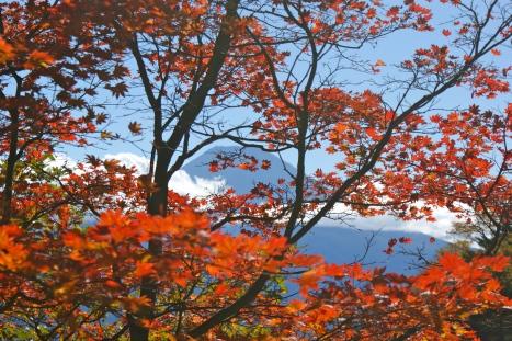 Fuji leaves