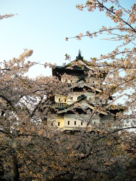 Hirosaki Castle with sakura