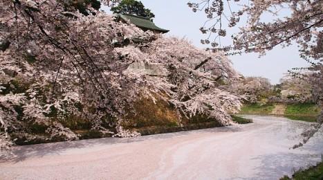 A pink, petal-filled moat at Hirosaki Castle (photo: Japanguide.com)
