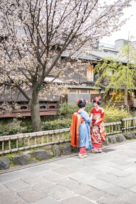 Spring Elegance; David Lovejoy; IJT Staff; Kyoto