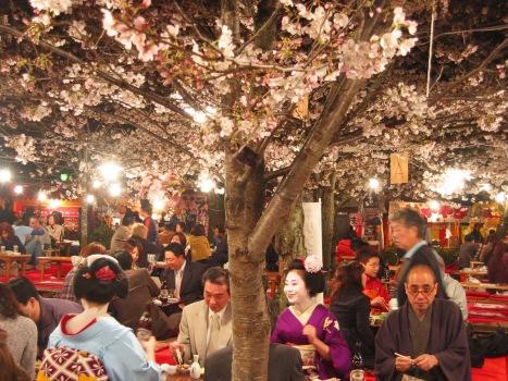 Hanami parties in Maruyama Park