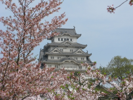Himeji Castle in the cherry blossom