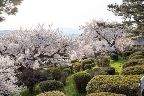 Kenrokuen Gardens with cherry blossom, Kanazawa